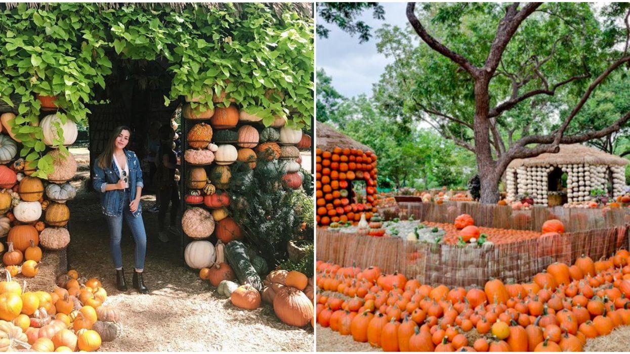 Dallas Arboretum Will Be Covered In Pumpkins
