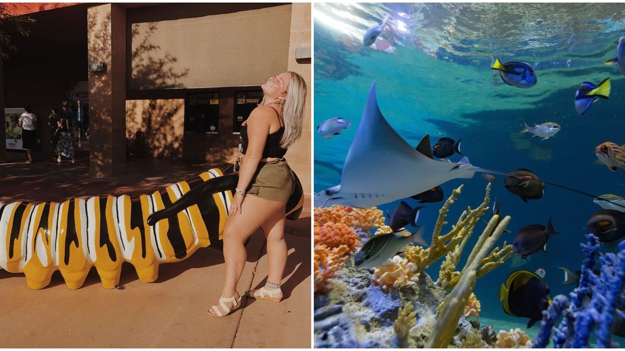 Aquarium In Scottsdale Arizona Is Hosting A Boozy Fish & Sip Night Tomorrow
