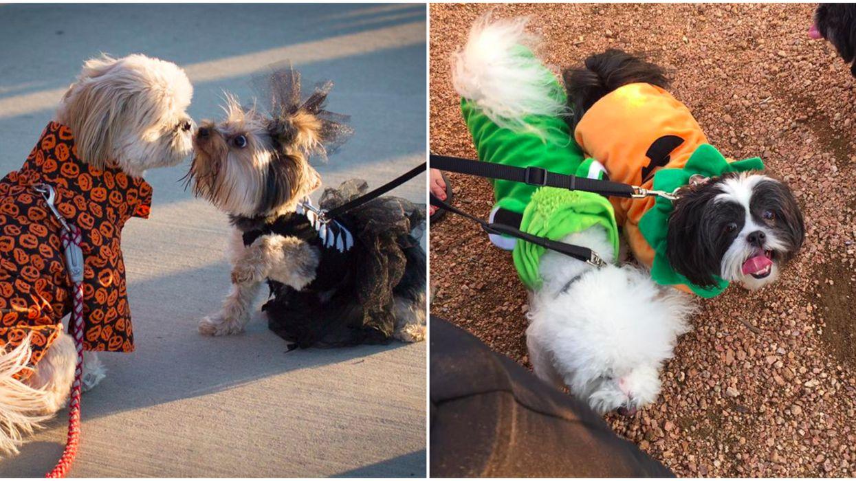 Arlington Is Having A Doggie Halloween Party