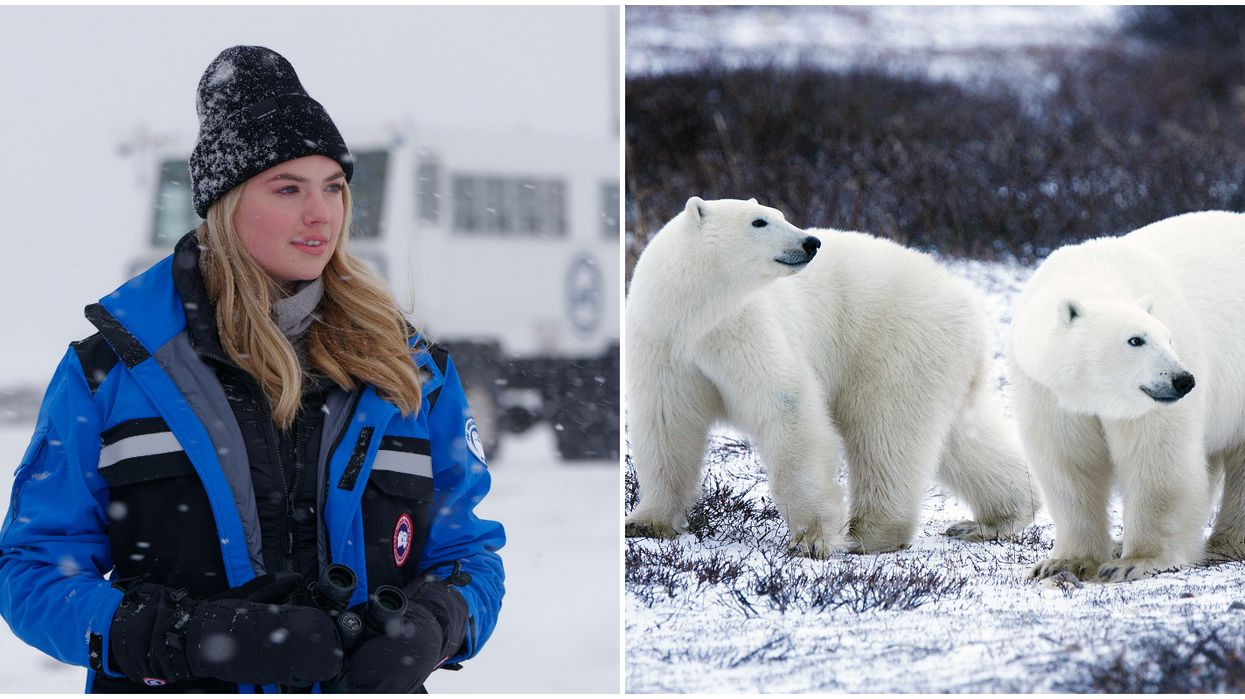 Polar Bears International's New Facility In Snowy Manitoba Attended By Kate Upton