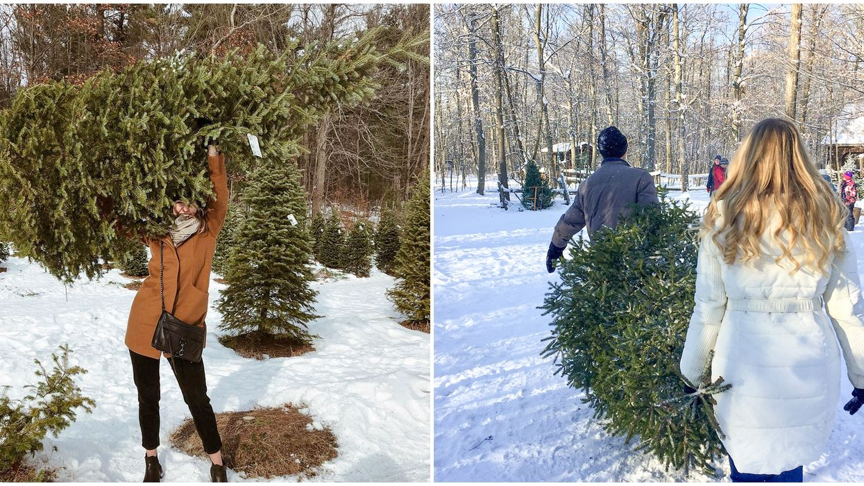 12 Christmas Tree Farms In Canada Where You Can Get A Real Christmas Tree