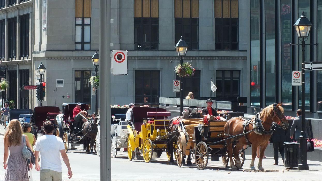Les calèches seront officiellement interdites dans le Vieux-Montréal