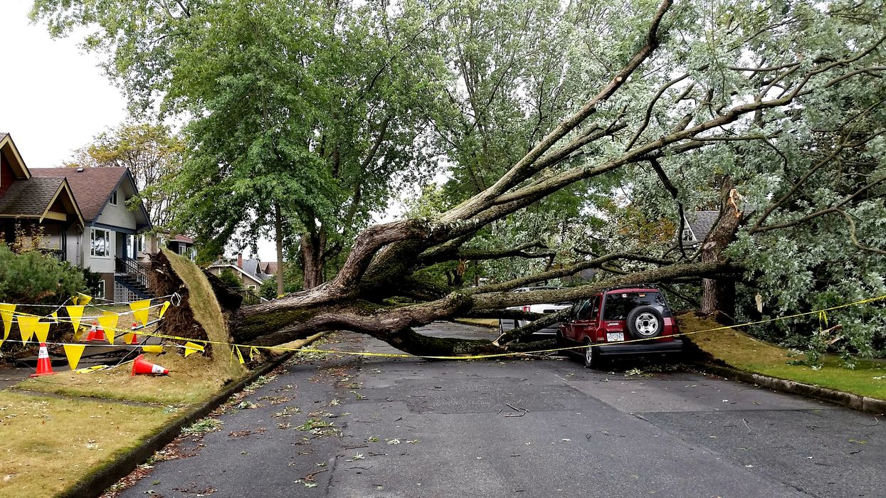 Vancouver Wind Warning On Friday With 70 km/h Winds, Loose Debris & Falling Trees