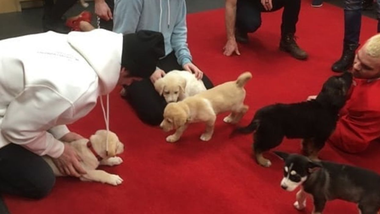 The Calgary Flames Cuddled Adoptable Puppies Before Saturday's Game To Destress (PHOTOS)