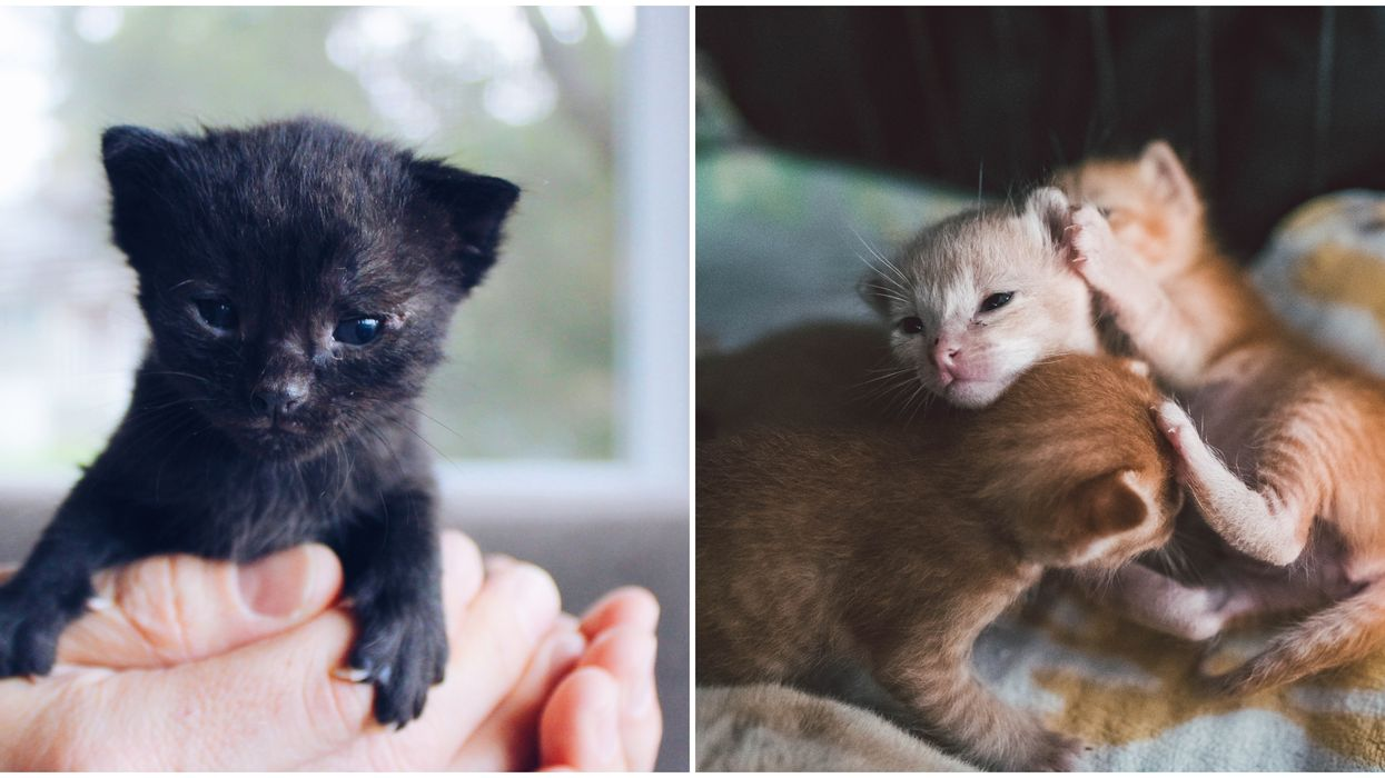 A Las Vegas Shelter Needs Volunteers To Help Take Care Of Newborn Kittens