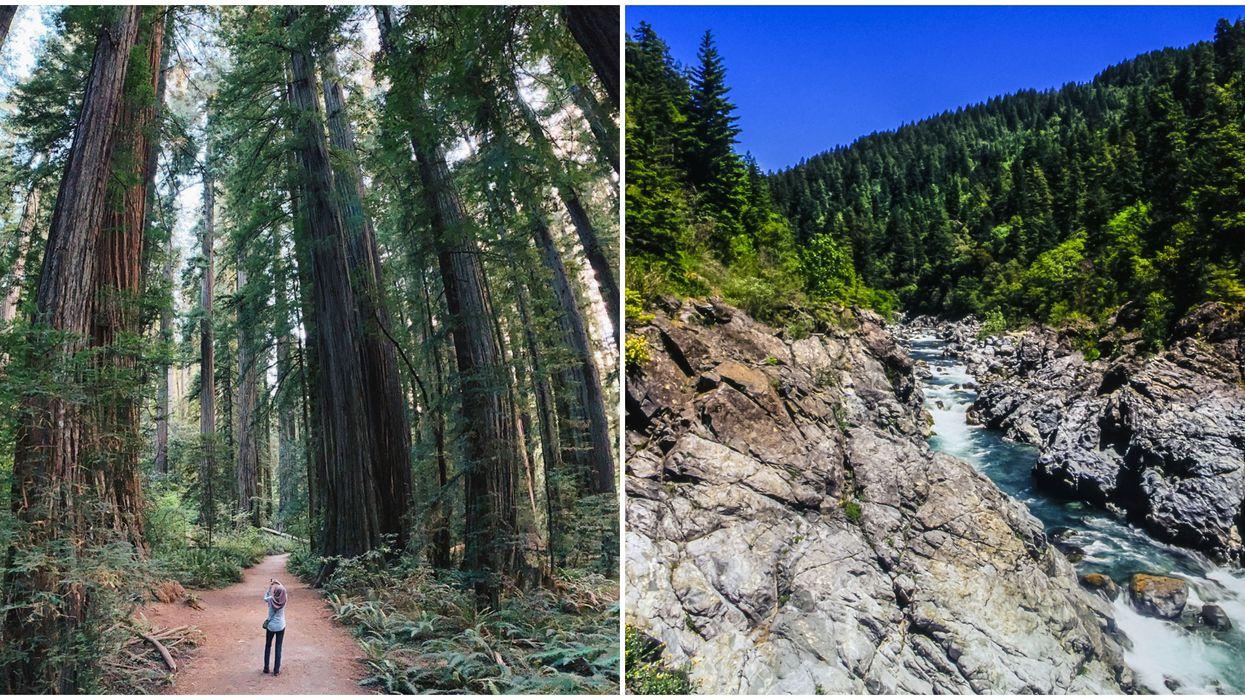 Redwood Forest Secrets You Never Knew
