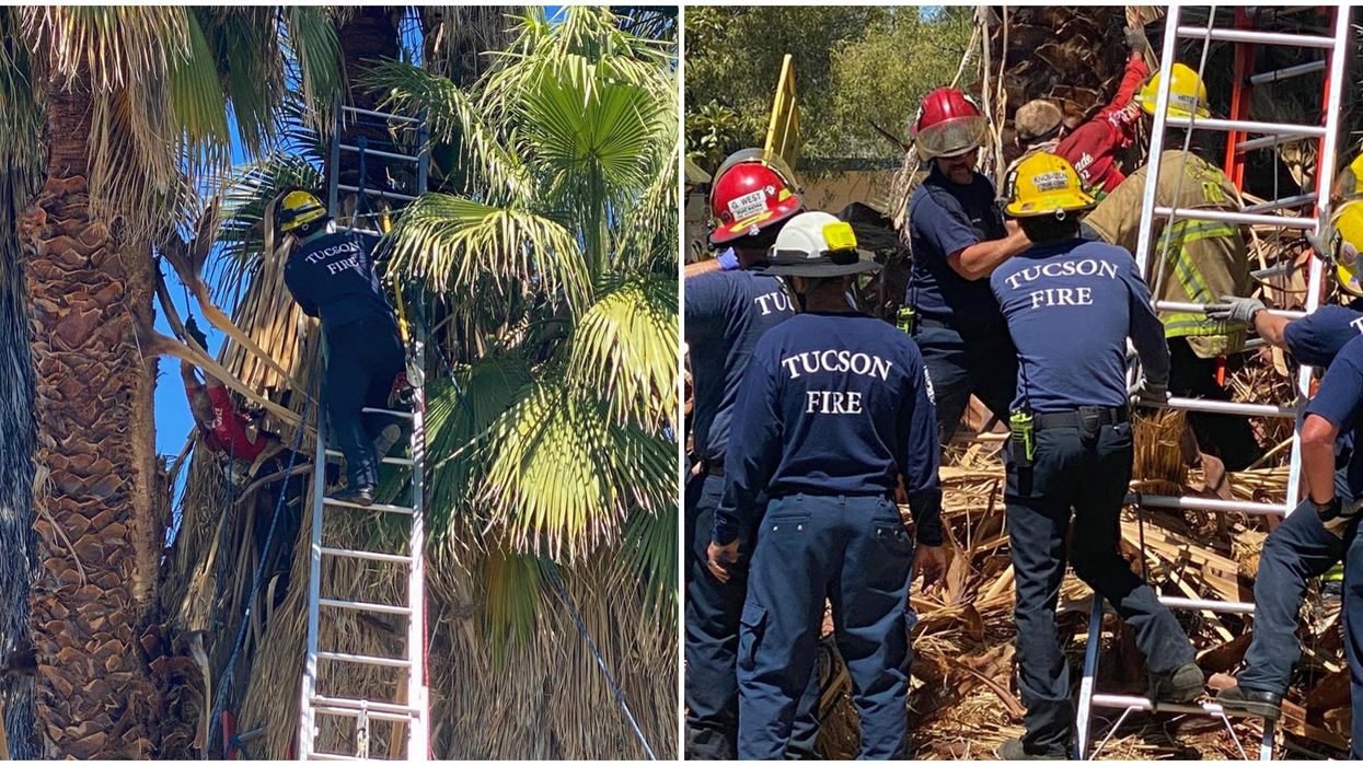 Tucson Fire Department's Dramatic Rescue Involved Saving A Man Stuck In A Tree (PHOTOS)
