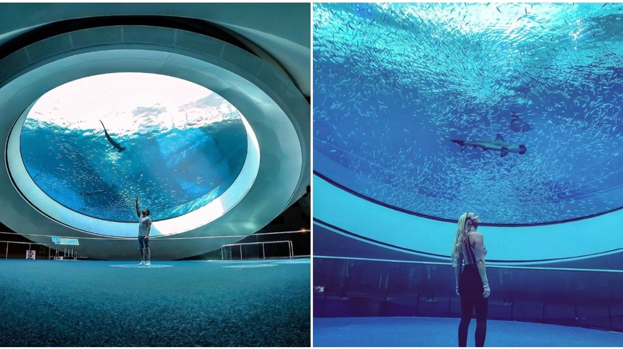 Frost Museum Of Science In Miami Has A Dome Window Where You Can See Sharks