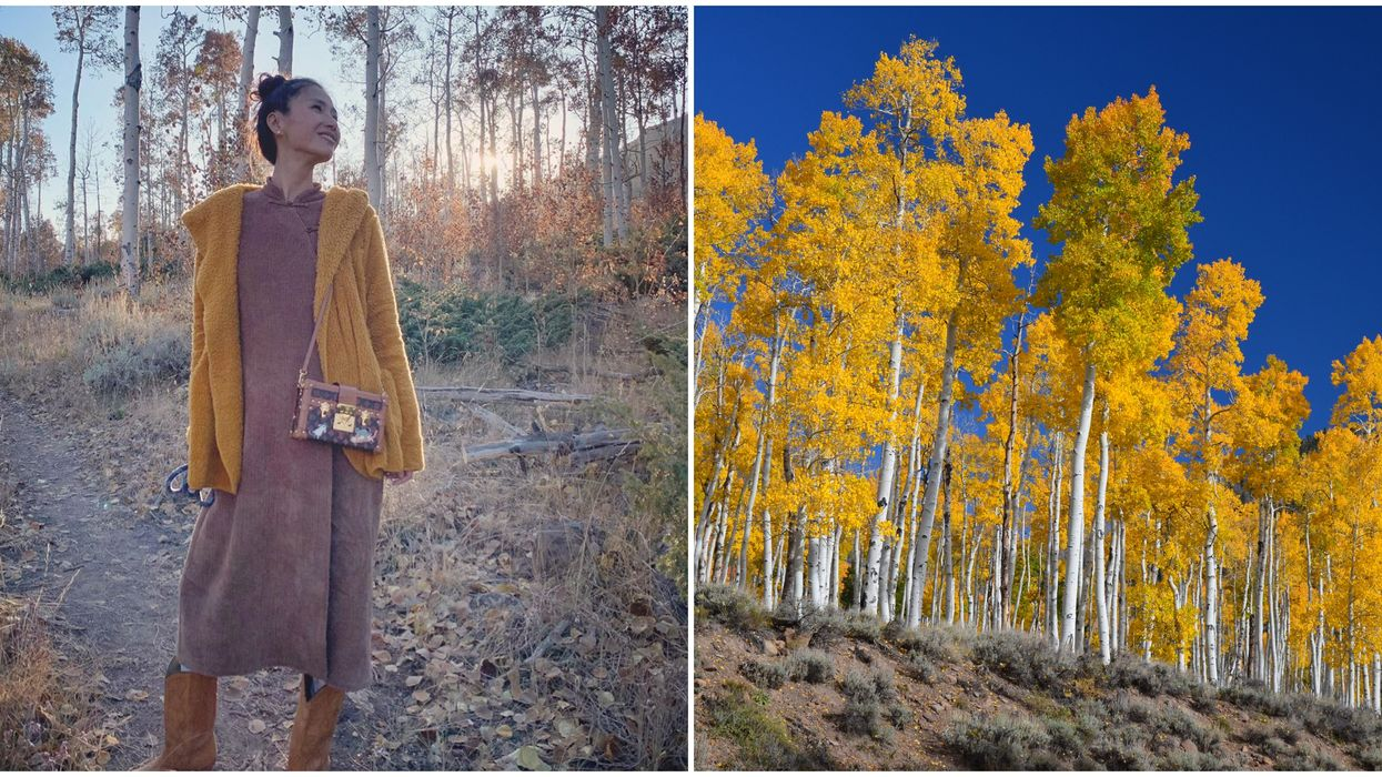 Pando Clone In Utah Is Dying & It Might Be Your Last Chance To See It