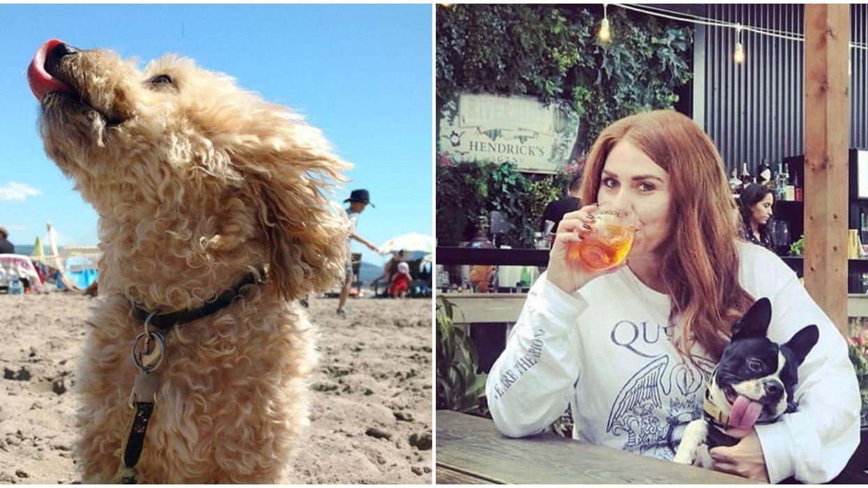 8 activités à faire avec ton chien au Québec cet été