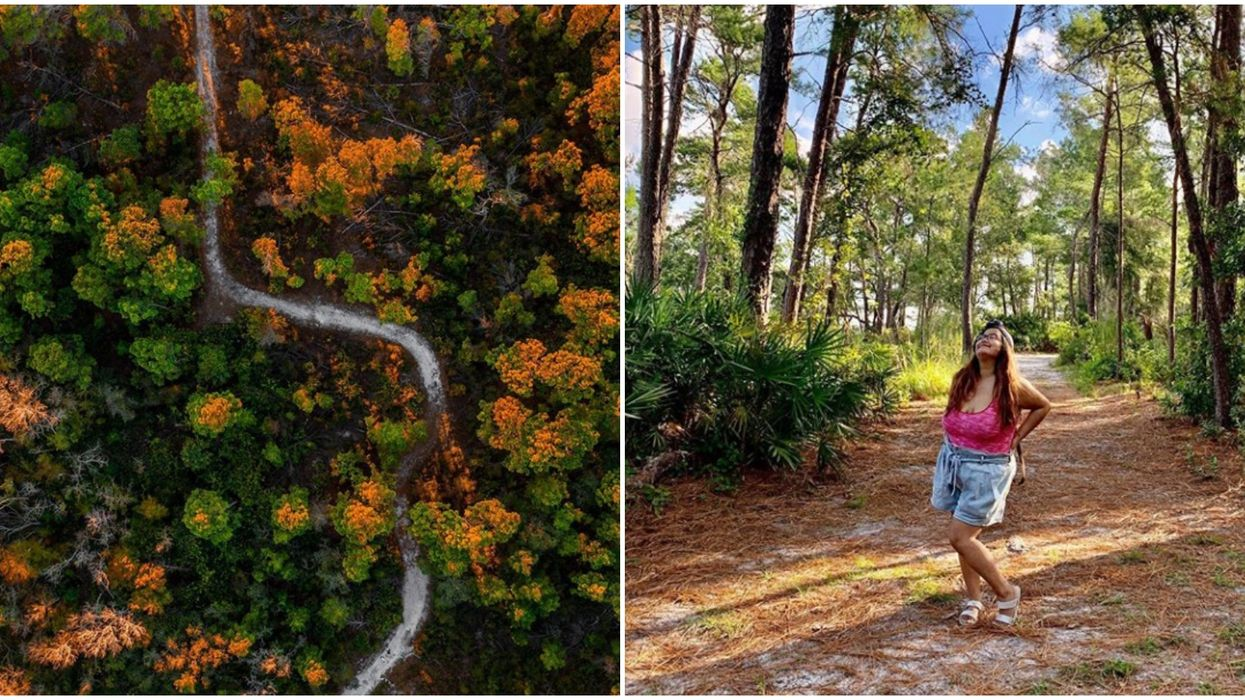 This Short & Easy Hiking Trail Near Tampa Leads To An Enchanting Hidden Beach