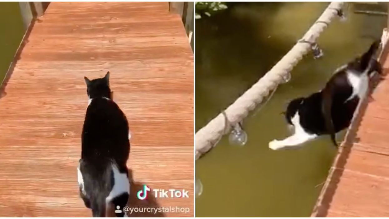 This Florida Cat's Wild Fall Has Gone Viral On TikTok & We Can't Stop Laughing (VIDEO)