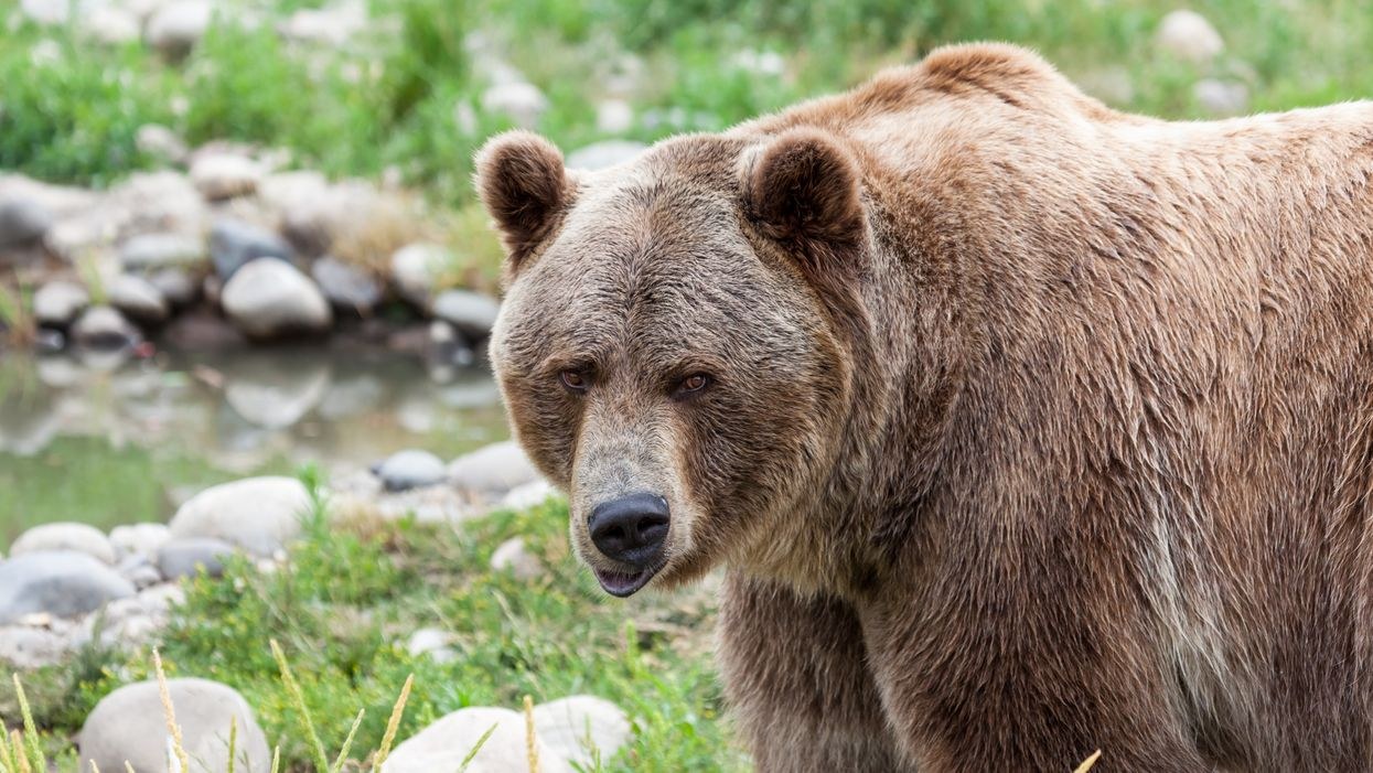An Alberta Man Had The Wildest Encounter With A Massive Grizzly & Got It On Tape (VIDEO)