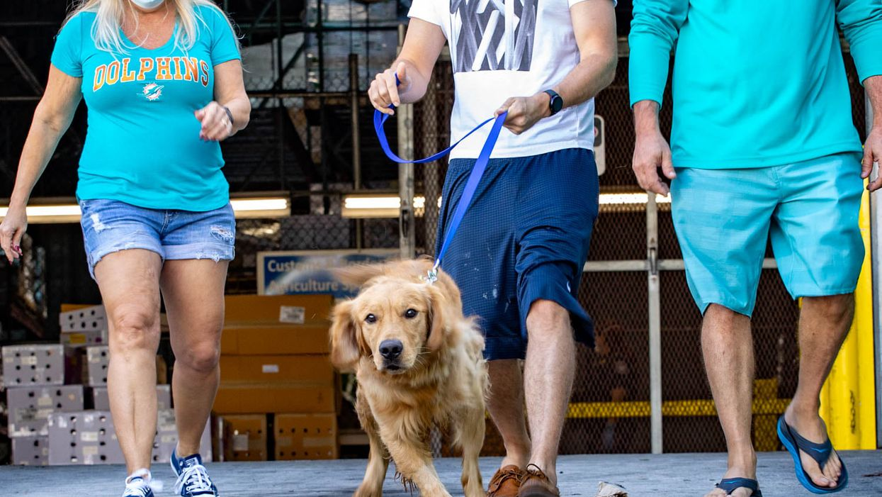 20 Golden Retrievers Just Got Rescued From A Meat Market In China & Sent To Forever Homes