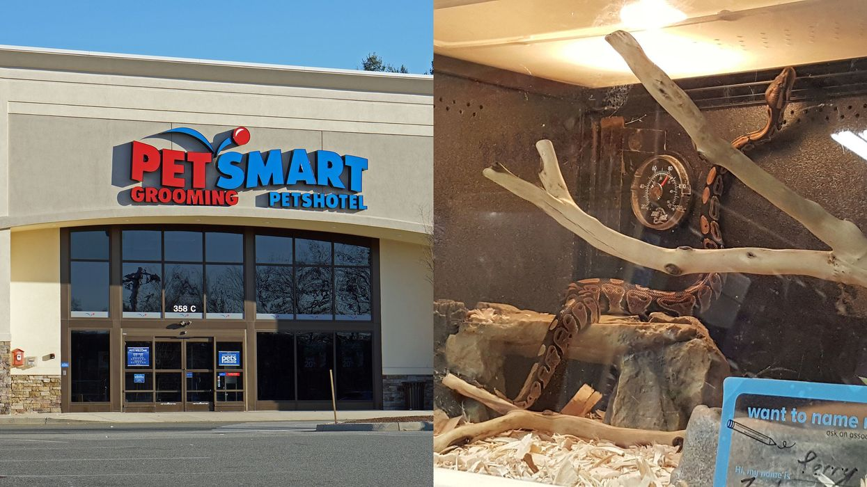 PetSmart In Ontario Called Out By Animal Protection Because Of A Snake's Living Conditions