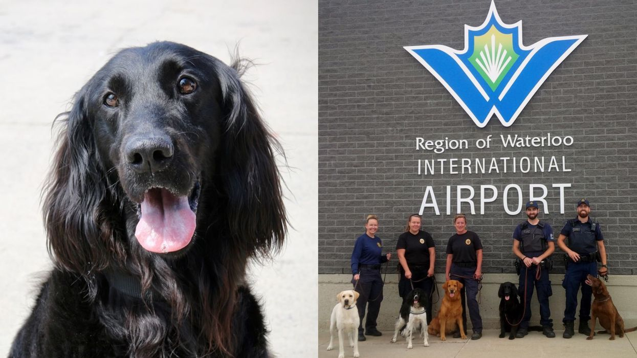 CBSA Is Hiring Puppies Right Now & They're Looking For Good Dogs Only