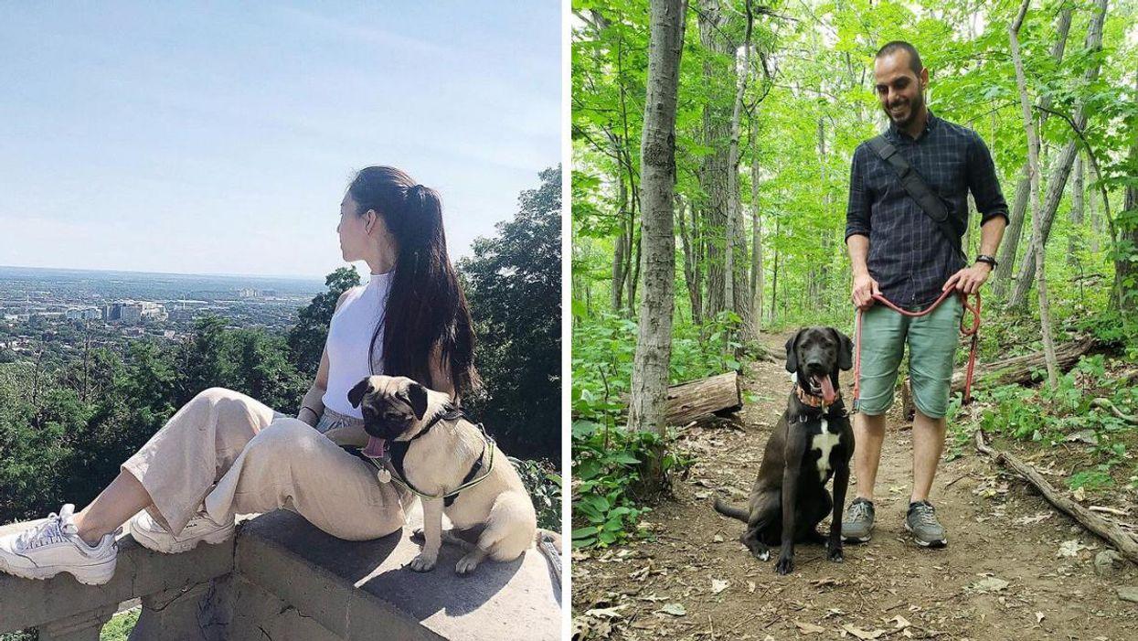 Pars en randonnée à Montréal avec ton chien au bois Summit