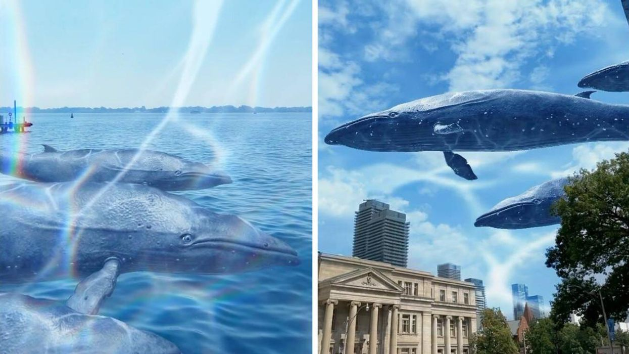 The ROM Has Virtual Whales In Toronto & You Can Snap A Selfie With Them