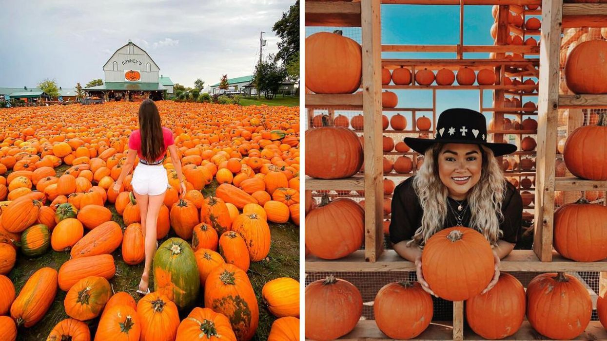 This Farm Near Toronto Is Having A Giant Pumpkinfest With Over 10,000 Orange Gourds