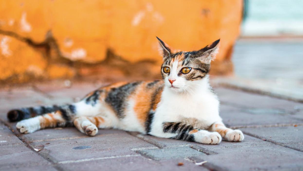 Ton chat « âme soeur » selon ton signe astrologique