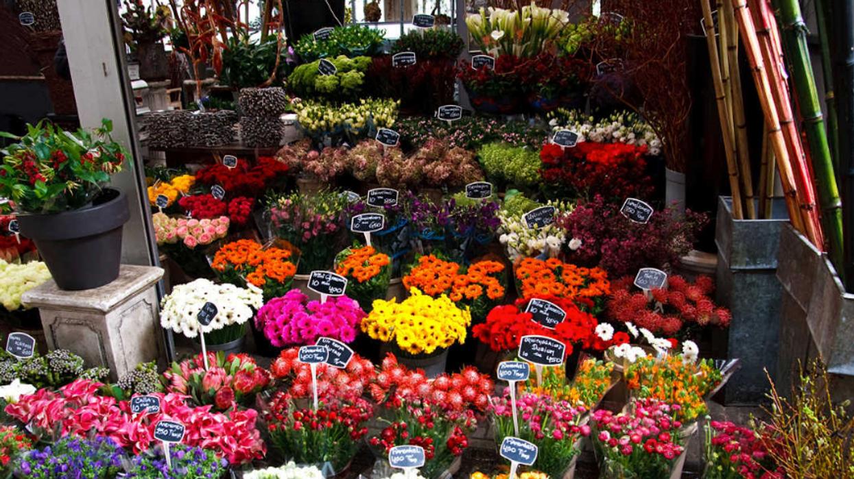 Un immense marché de fleurs débarque à Montréal et c'est gratuit