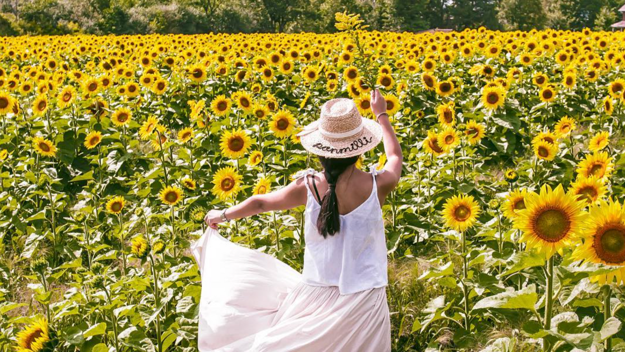 This Massive Sunflower Field Near Ottawa Needs To Be On Your Summer Bucket List