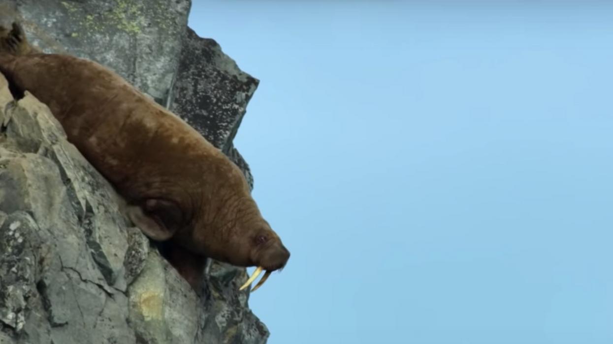 «Our Planet » de Netflix montre des centaines d'animaux mourir et c'est tout simplement horrible à regarder