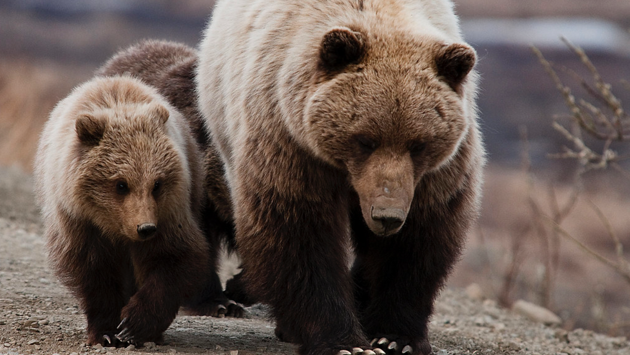 This Canadian Man Survived A Grizzly Bear Attack In BC And His Story Is Crazy