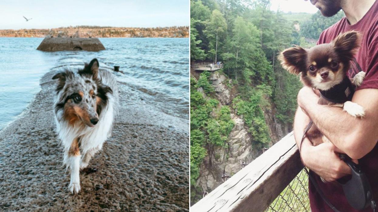 7 randonnées que tu peux faire avec ton chien cet été au Québec