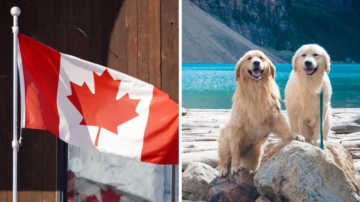Les races de chiens les plus populaires dans chaque province au Canada sont révélées