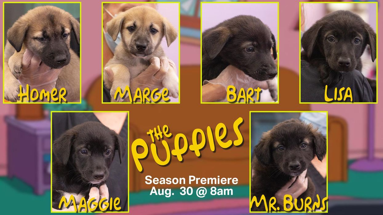 Ontario Puppies Are Going Up For Adoption & Have The Best Names
