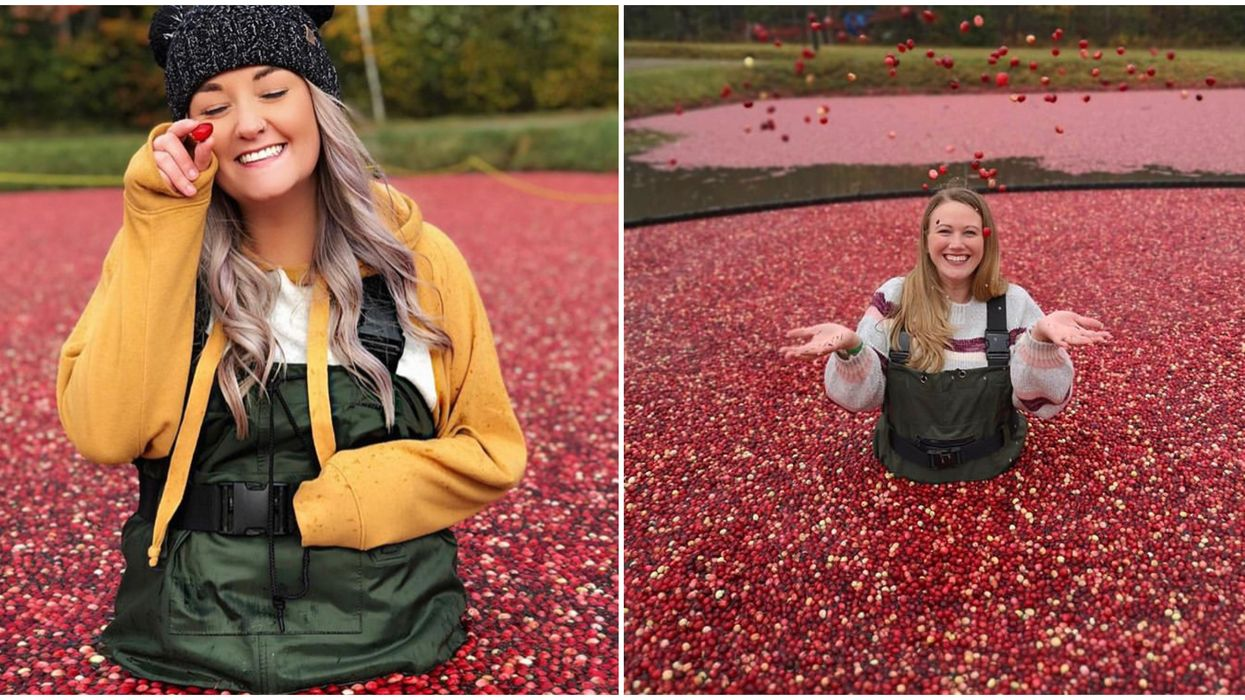 Ontario's Cranberry Farm Lets You Splash Through A Sea Of Berries This Fall