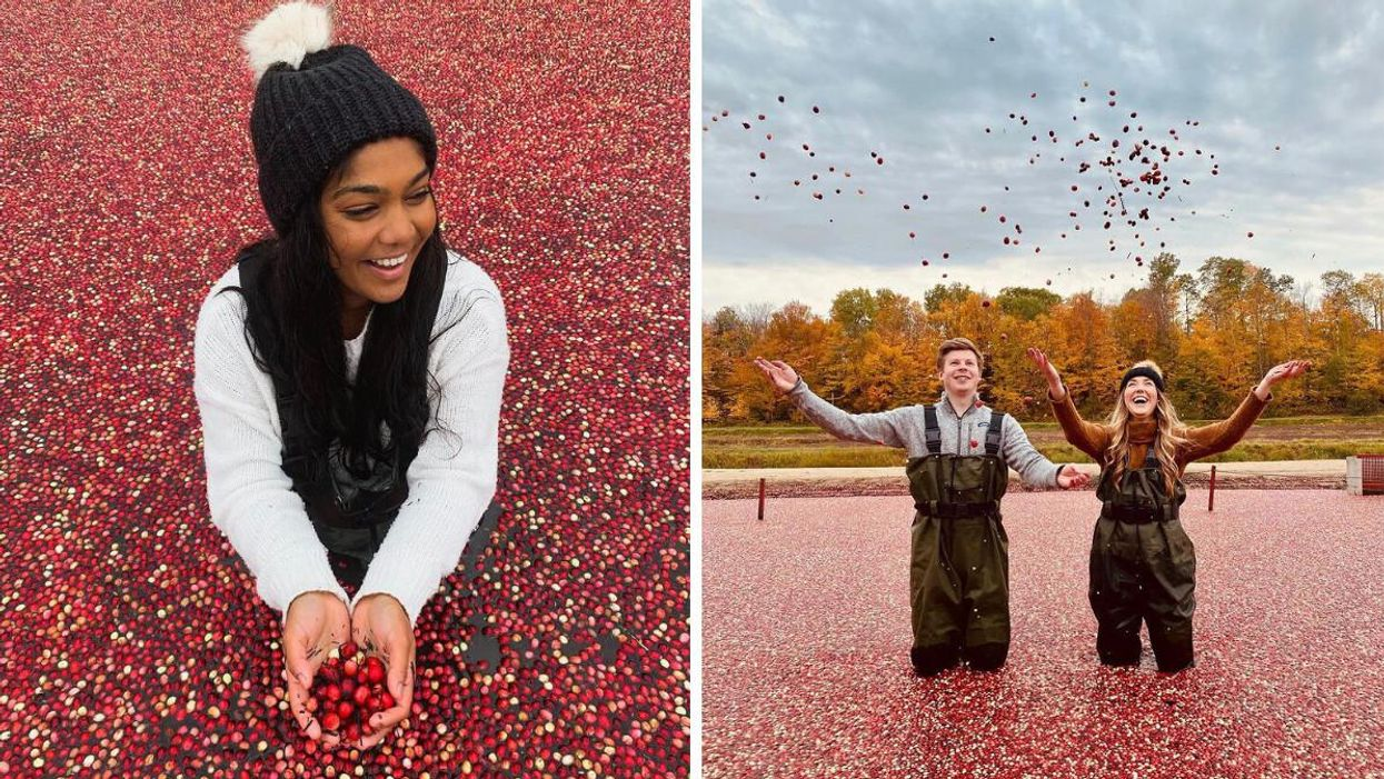 Ontario's Cranberry Farm Lets You Wade Through A Sea Of Floating Berries This Fall