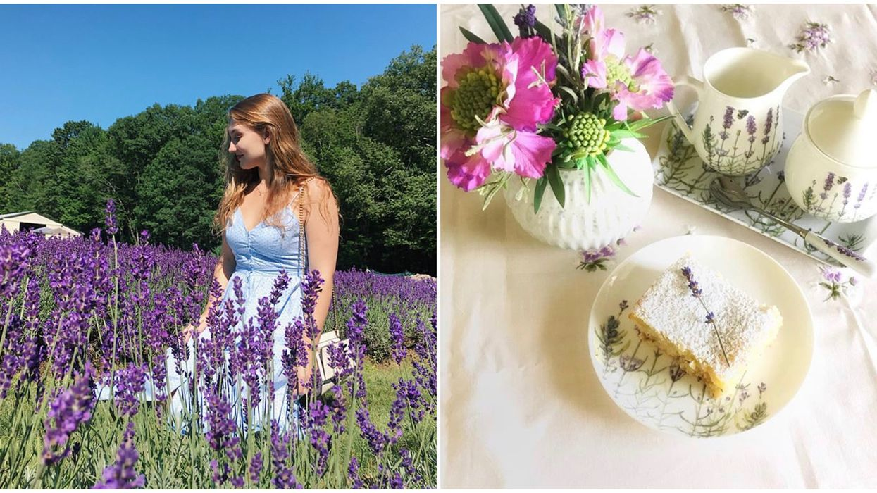 Ontario's Lavender Afternoon Tea Party Has Flower Infused Treats This Summer
