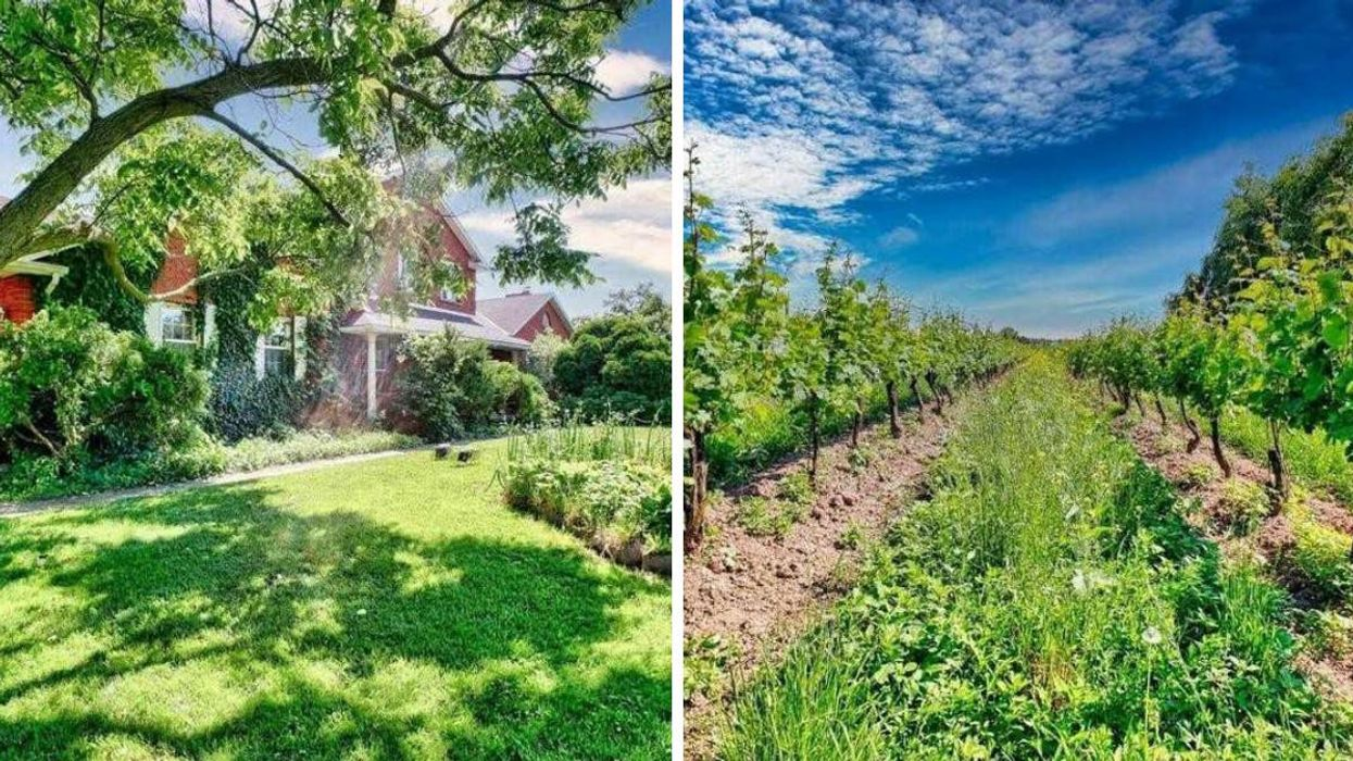 Ontario Vineyard For Sale Lets You Sip Wine Everyday
