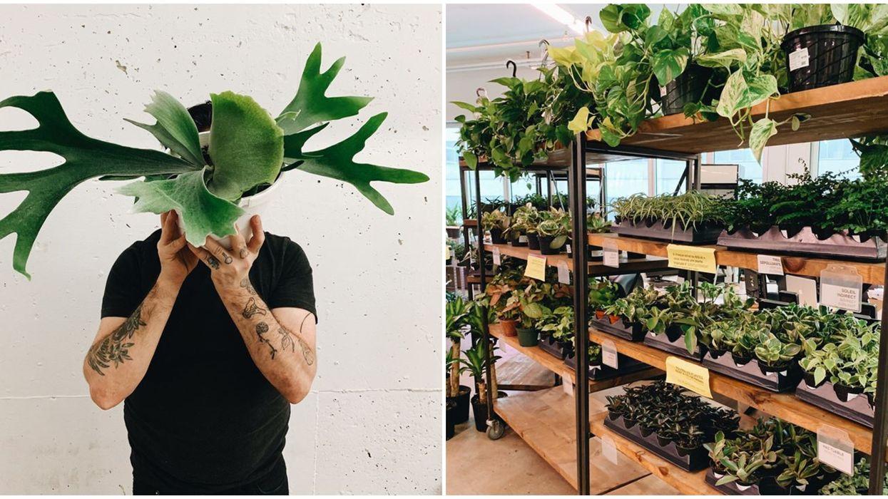 Plantzy : Une vente de plantes faciles d'entretien a lieu à Montréal