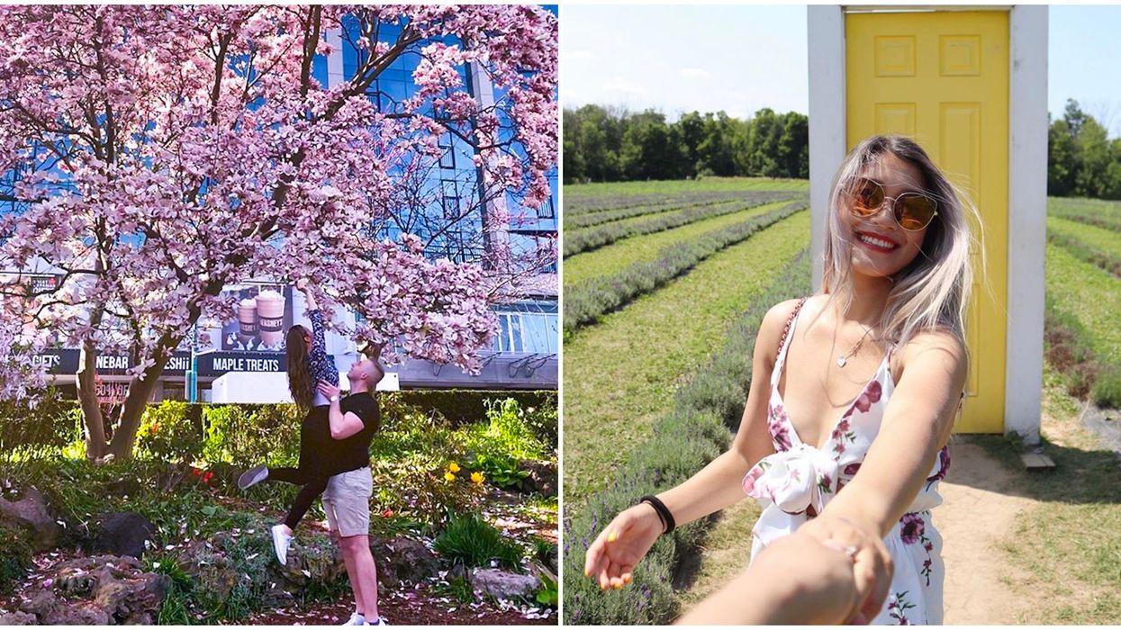 Spring Date Ideas Near Toronto You Need To Road Trip To This Season