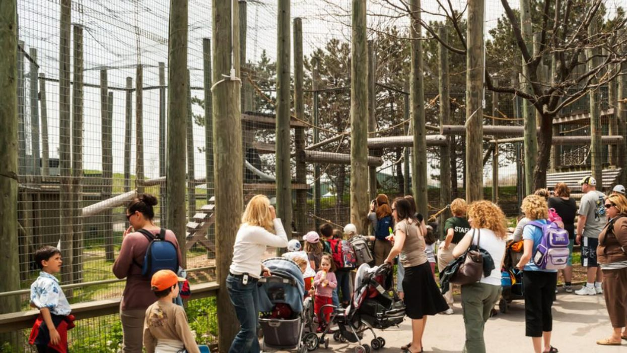 The Toronto Zoo Will Only Allow Fully Vaccinated Guests To Visit Starting This Month