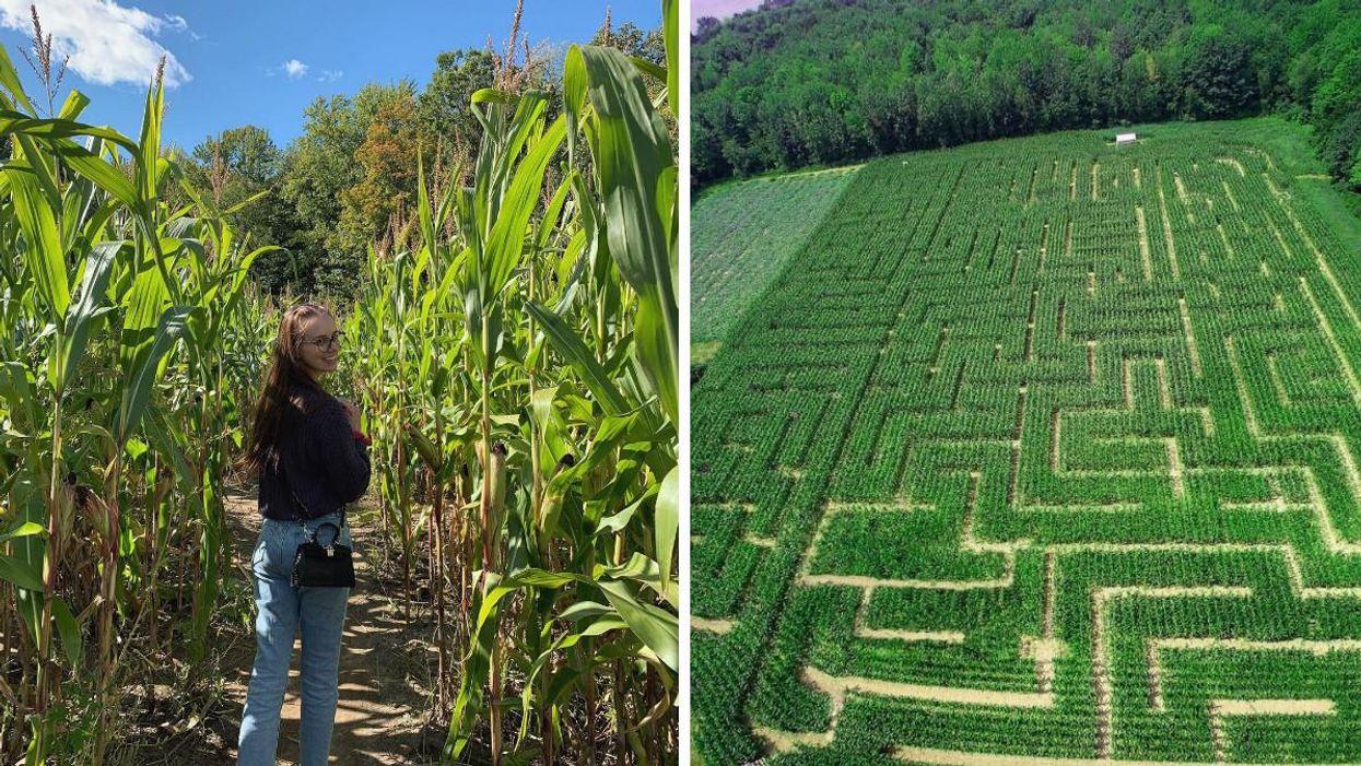 These Escape Room Corn Mazes Near Ottawa Will Make You Feel Like A Detective