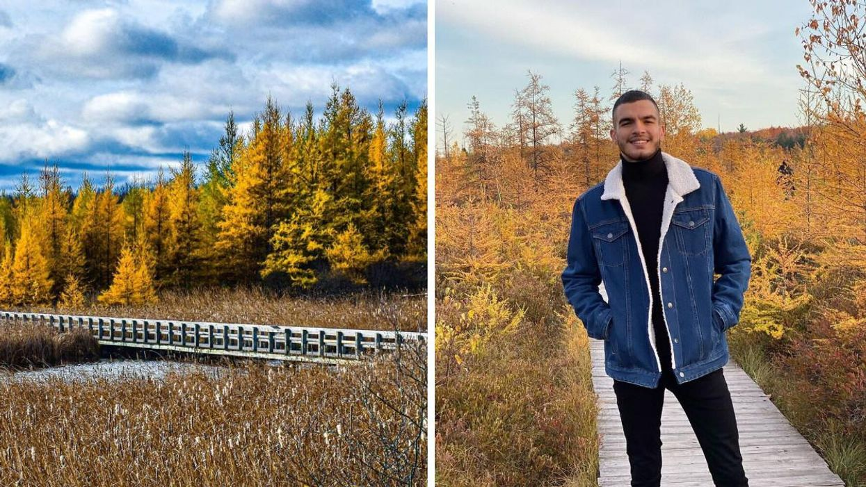 This Boardwalk Trail In Ottawa Is Hidden In The Suburbs & Leads To A Golden Wonderland