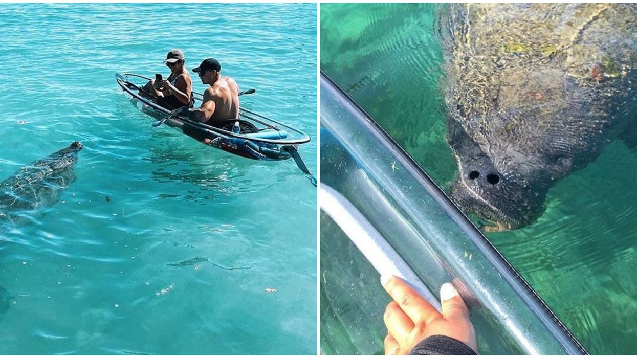 This Clear Kayak Tour In Florida Let's You Get Up Close To Manatees