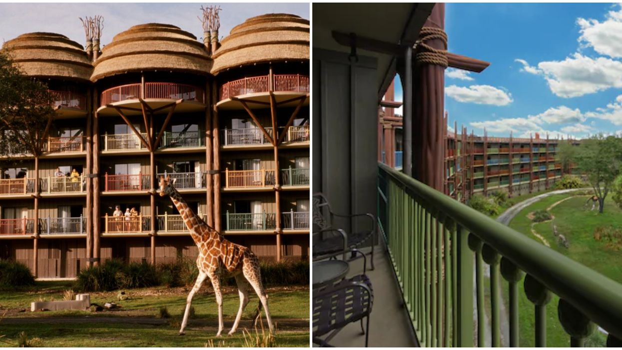 This Hotel In Florida Gets You Up Close And Personal With African Animals