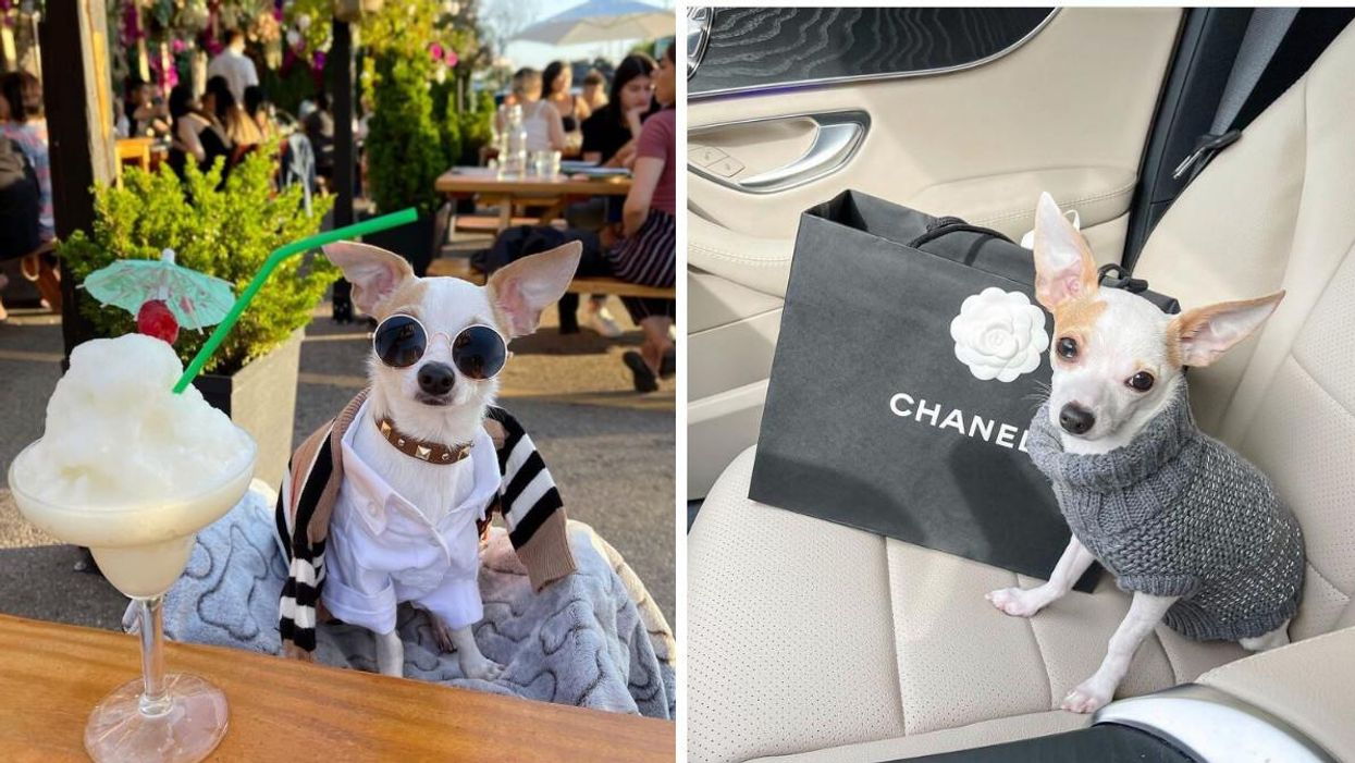This Ontario Dog Has A Thousand Dollar Wardrobe & Is So Fashionable