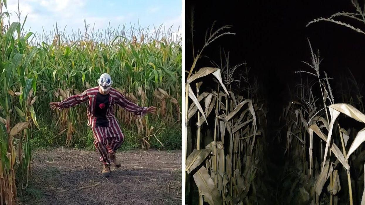 This Pitch-Black Corn Maze Is Less Than 2 Hours From Ottawa So Pack Your Flashlight