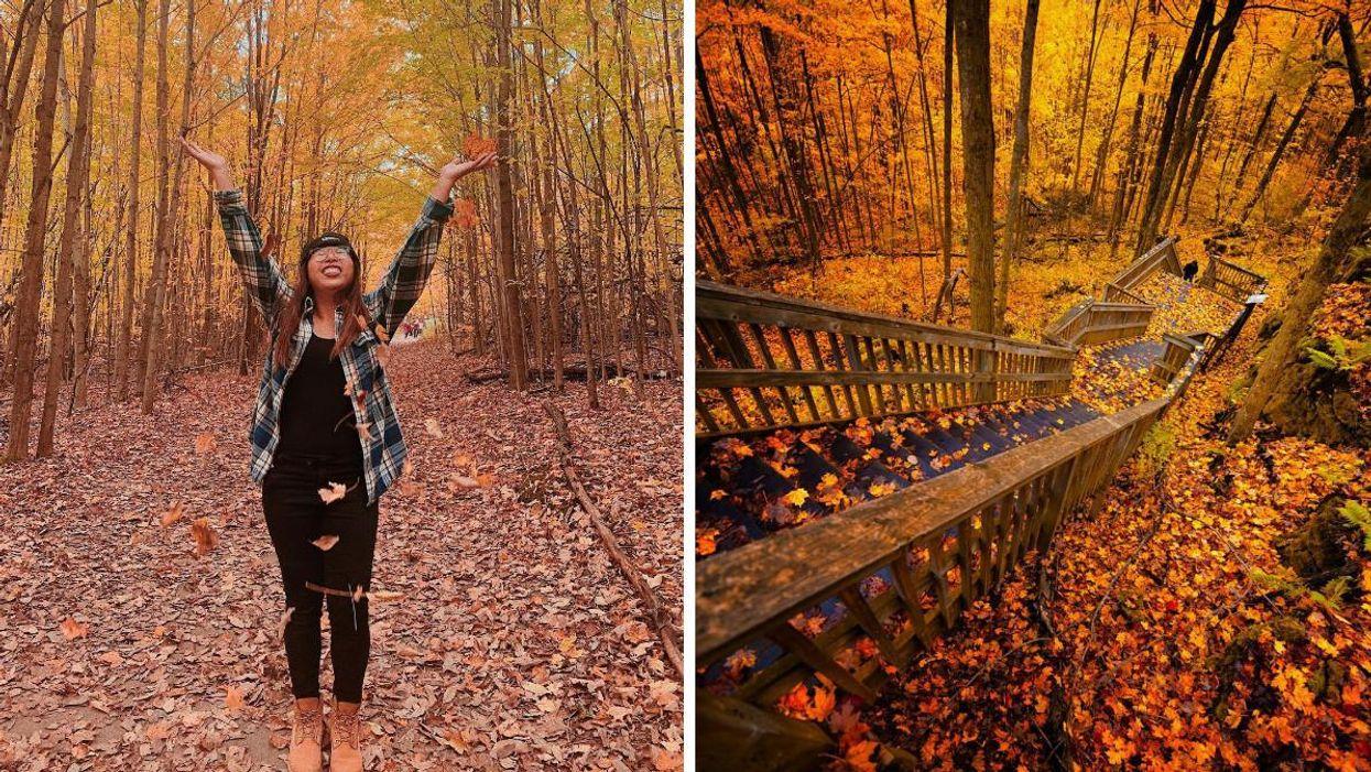 This Provincial Park In Ontario Has A Staircase Trail Through A Fall Dreamland