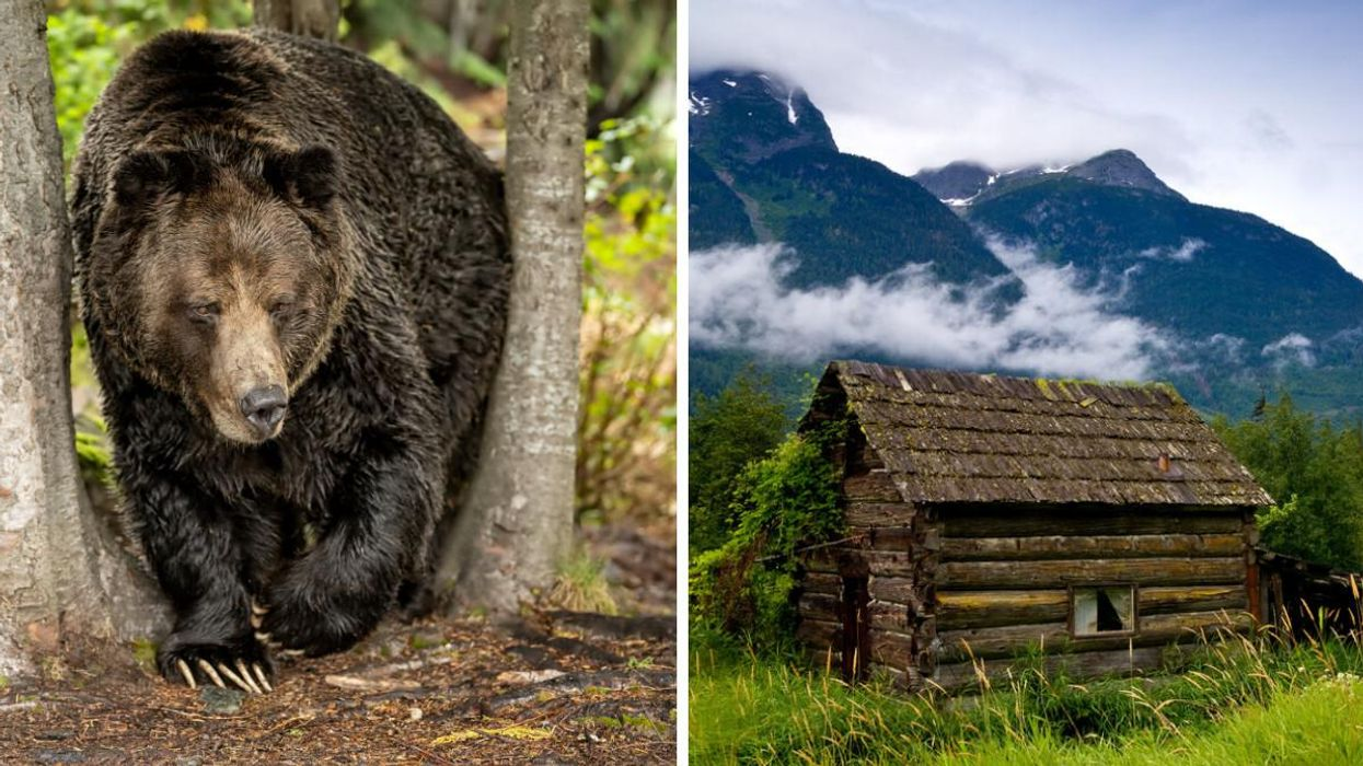 This Town In The Boonies Of BC Has Some Of The Best Spots For Watching Grizzlies