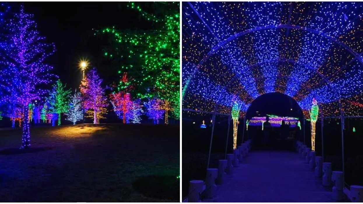 Toronto's Journey Into Enchantment Lets You Drive Through A Glowing Wonderland Next Month