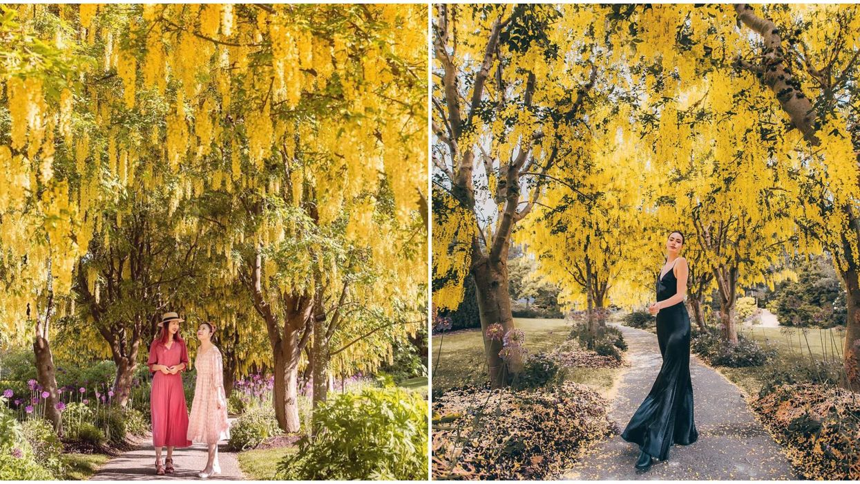 Vancouver's VanDusen Botanical Garden Has A Magical Tunnel Of Bright Yellow Blossoms