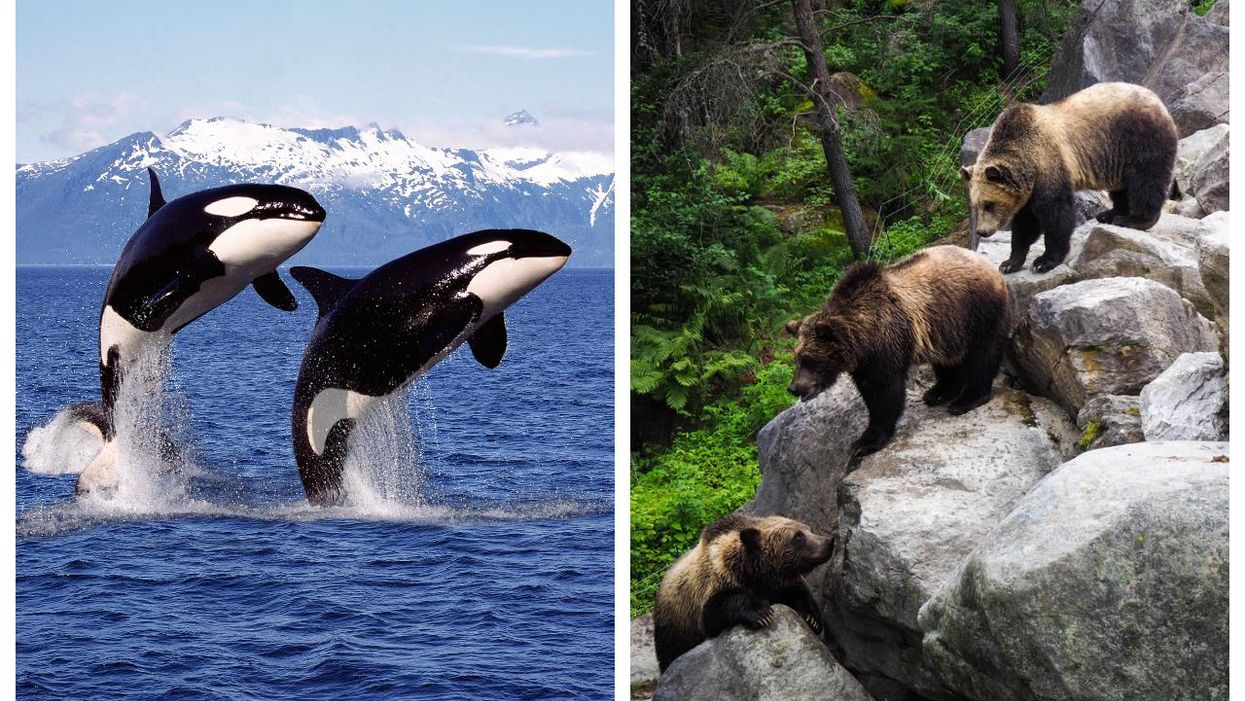 Wildlife In Canada: 11 Places To Have Life-Changing Experiences