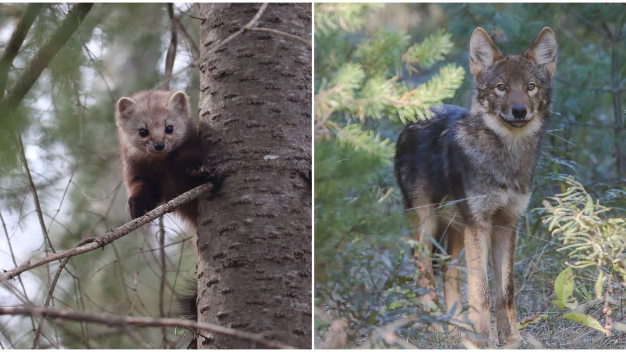 Wildlife In Canada Is Unique With Over 300 Species Found Nowhere Else In The World